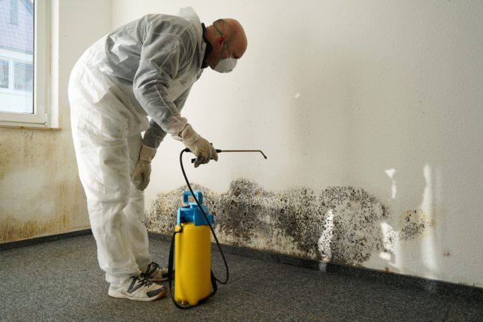 What's The Difference Between Mold Remediation & Mold Removal?
