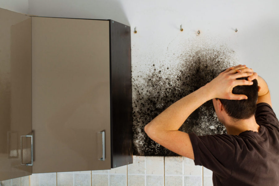 Do You Have A Mold Problem? 4 Common Warning Signs Of Mold Growth