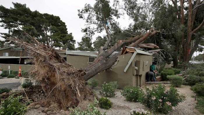fallen tree on top of house